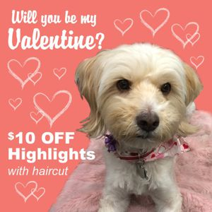 $10 Off Highlights with Haircut!  Feb 2016
